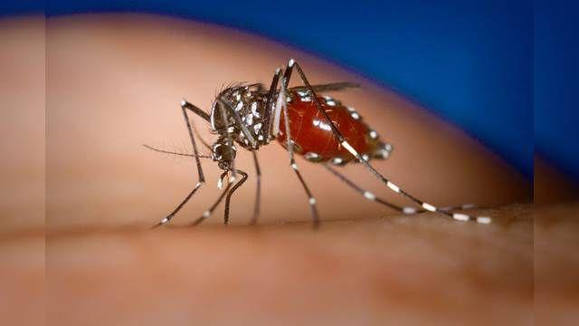 茲卡病毒大爆發!亞洲國家拉警報