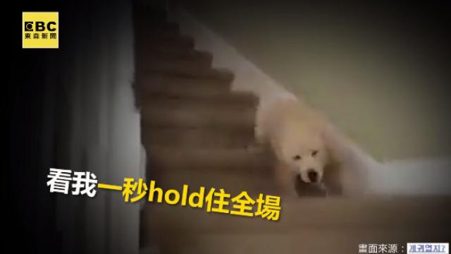 毛小孩有練過!下樓梯摔倒「華麗炫技」