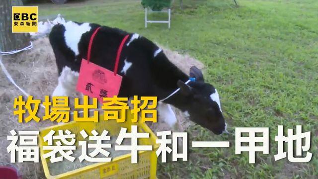 牧場出奇招 福袋送牛和一甲地