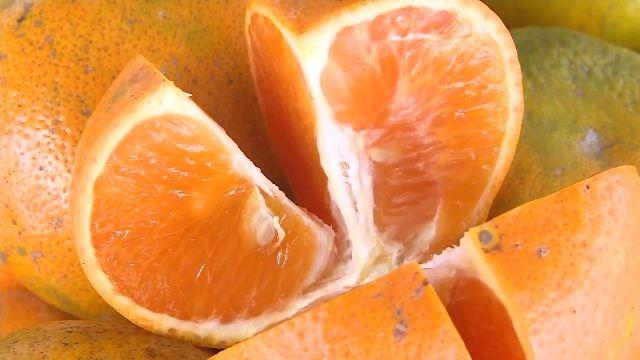 超級寒流凍傷水果 年節消費市場價翻