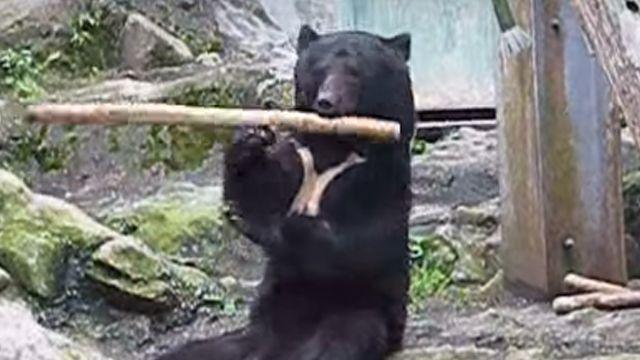 純正少林功夫 《功夫熊貓》也遜色!