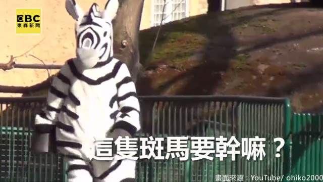 猛獸脫逃記?東京動物園逗趣演練!