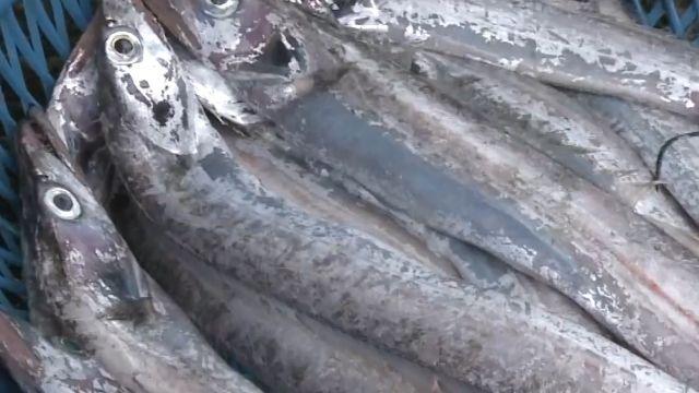 萬元現金買嘸白帶魚 遭黑幫壟斷?