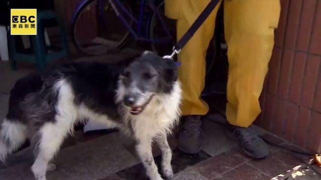 搜救犬「小強」超厲害 連日來找到5個標示點