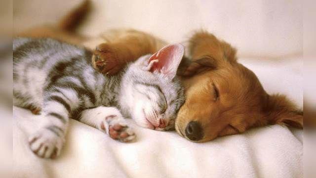飼主你知道嗎 貓狗誰較愛主人?