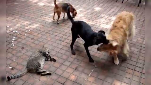 傻眼!狗狗玩過頭 竟狠踩喵爺肚肚