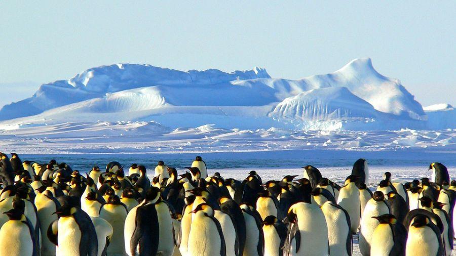 生態浩劫!冰山阻覓食 15萬企鵝餓死