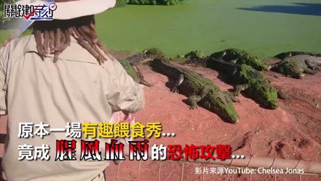 鱷魚搶食竟廝殺!餵食秀變血腥戰場