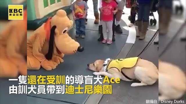 看見偶像好興奮!導盲犬偷吻布魯托