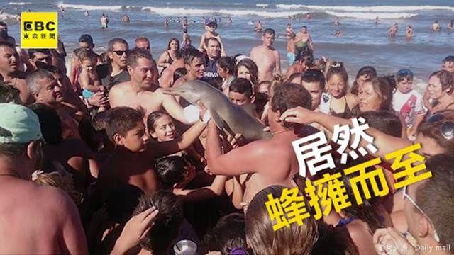 沒人性!只顧自拍撫摸 竟把海豚玩到死