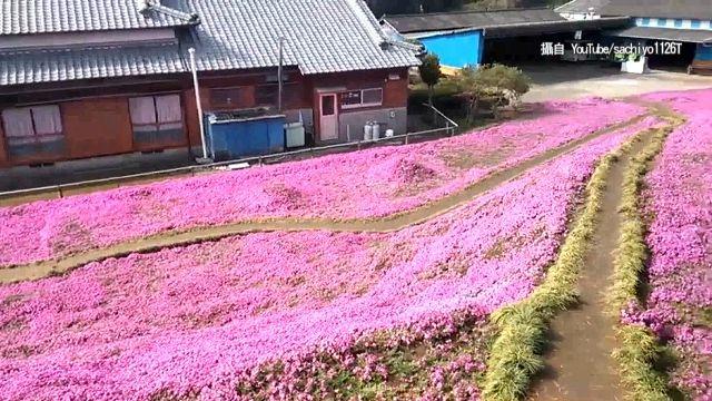 朵朵都是愛! 日賞櫻新景點 背後故事讓人噴淚