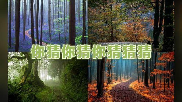 世界十大絕美森林!你猜得出哪張是台灣嗎?