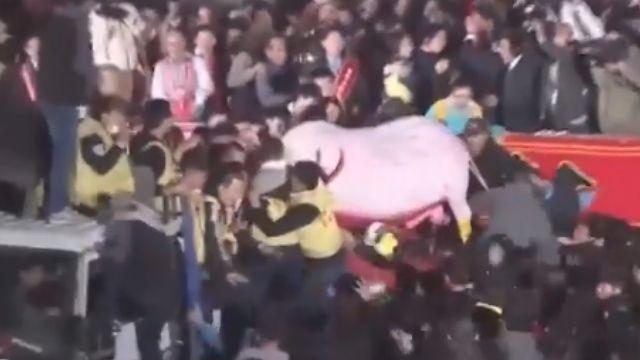 鹿耳門搶春牛活動 今年又再爆發衝突