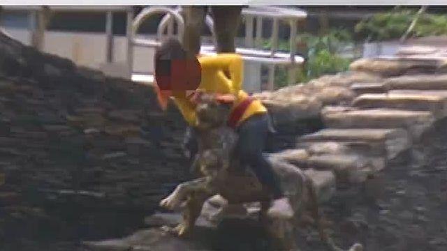原民部落騎雲豹雕像 居民反感:侮辱文化