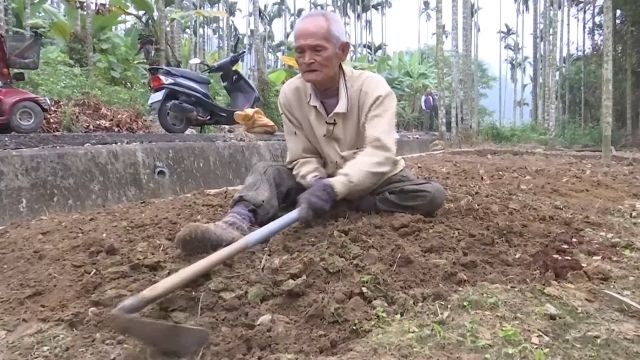 車禍下半身癱 老農爬行種咖啡果樹