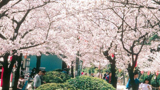 大阪賞櫻嗎?8大熱門景點必遊