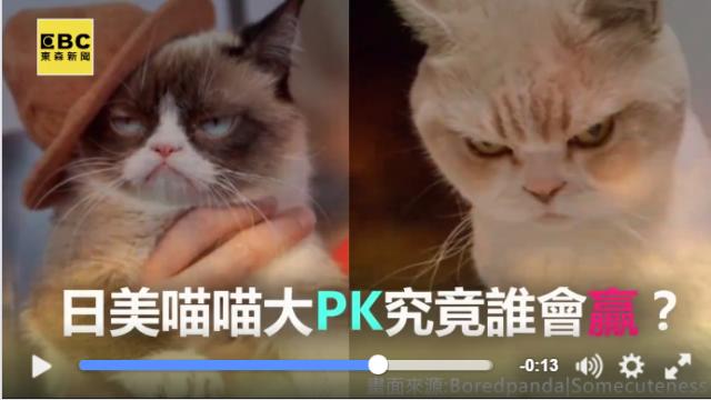 美日大PK!臭臉貓vs.暴怒貓 你壓誰贏?
