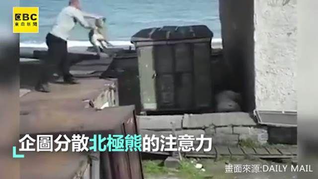 可憐狗兒當誘餌扔 分散北極熊注意力
