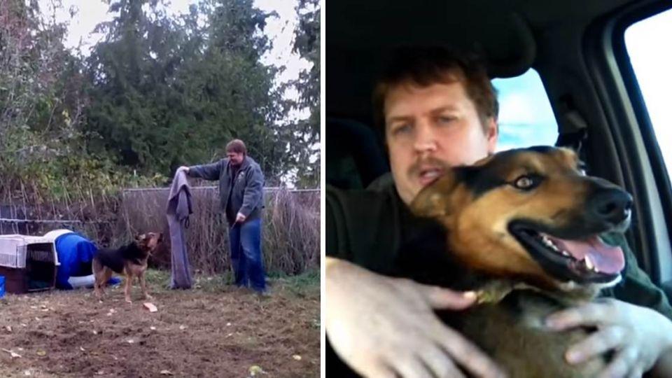 被鐵鍊禁錮多年…家中惡犬的真實告白