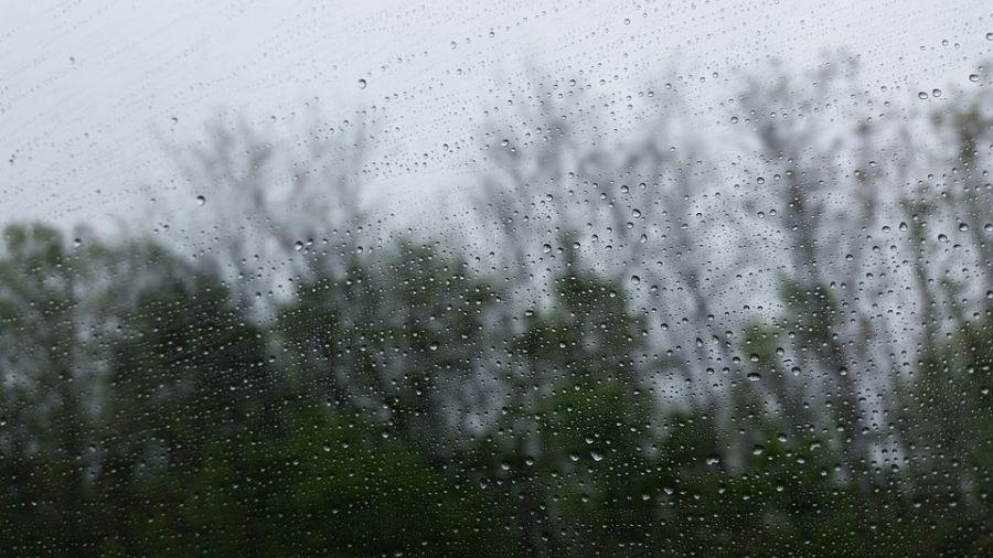 清明時節雨紛紛!有短暫陣雨 早晚天氣涼