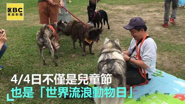 4/4世界流浪動物日 毛孩的心願:請帶我回家