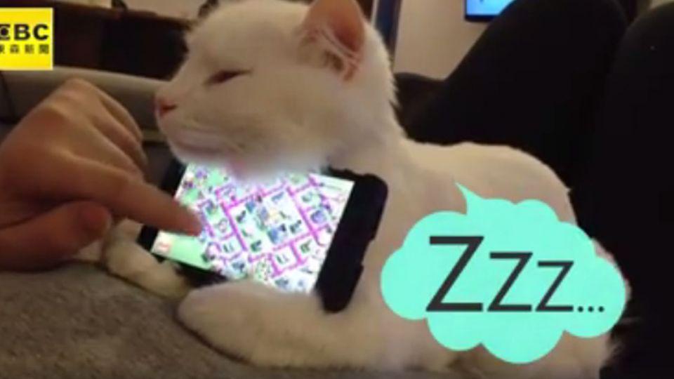 想躺著玩手機?你需要一個貓咪手機架