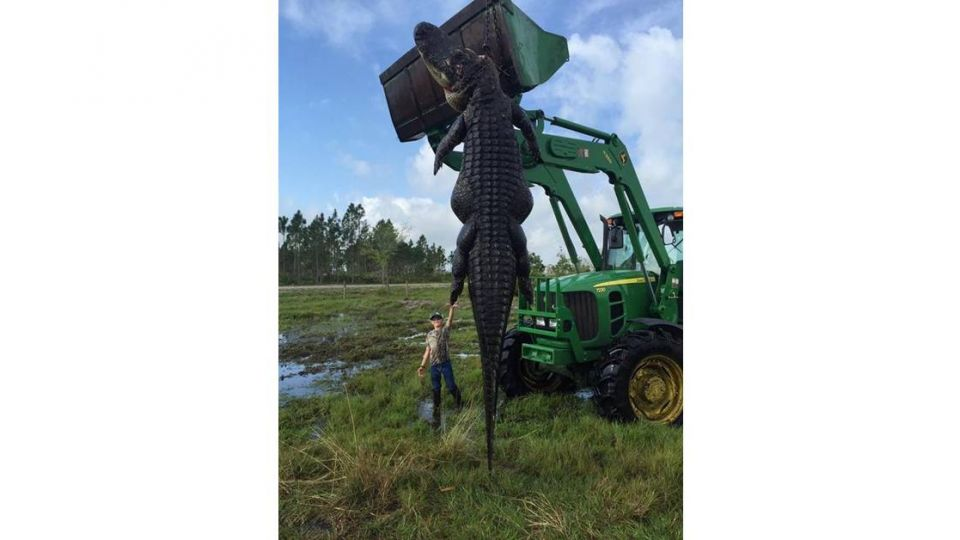 妖孽哪裡跑!3個成人大巨鱷 竟被老農夫收服