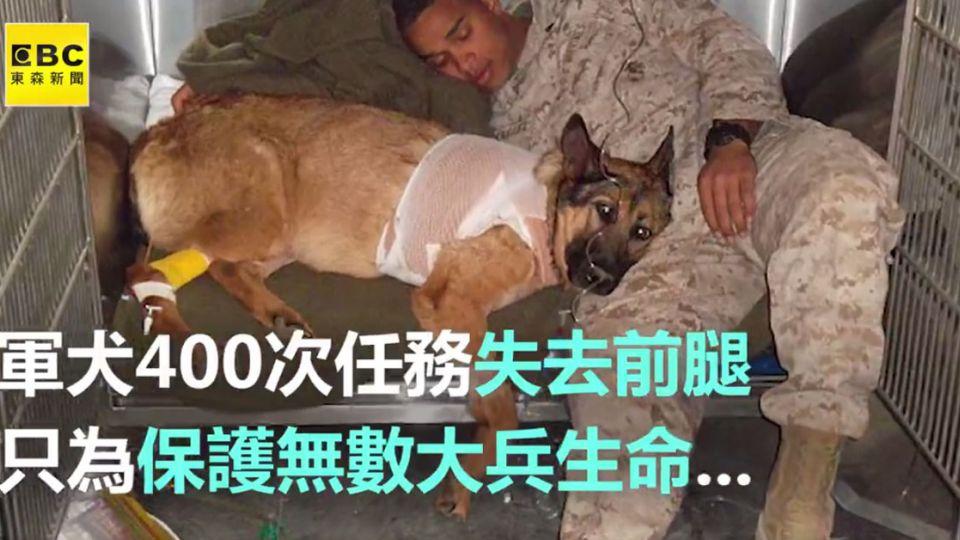 還好有牠!軍犬犧牲前腿 拯救大兵性命