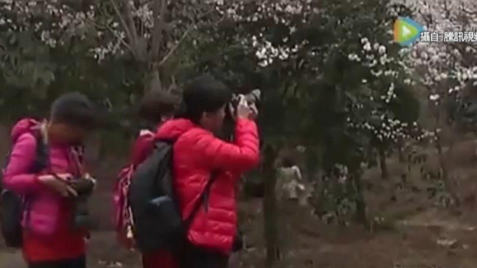 陸客日賞櫻名所內不文明行為 令人瞠目結舌