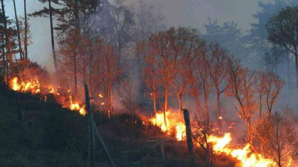 12公頃林地因烹飪全毀 竟然只罰30萬?