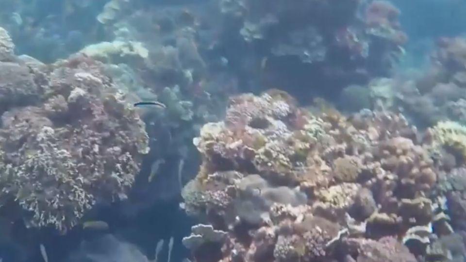 開採珊瑚不破壞環保?! 知名寶石業挨轟:廣告不實