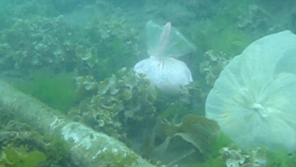 批縣府「帶頭破壞」! 豆腐岬施工 恐污染珊瑚礁