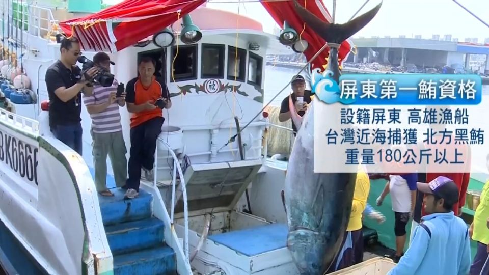 屏東「第一鮪」現身 漁船連夜飆回東港