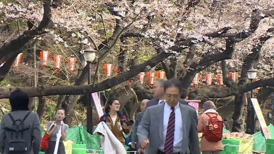 日本春天「櫻爛漫」 季節商品緊抓消費者的心