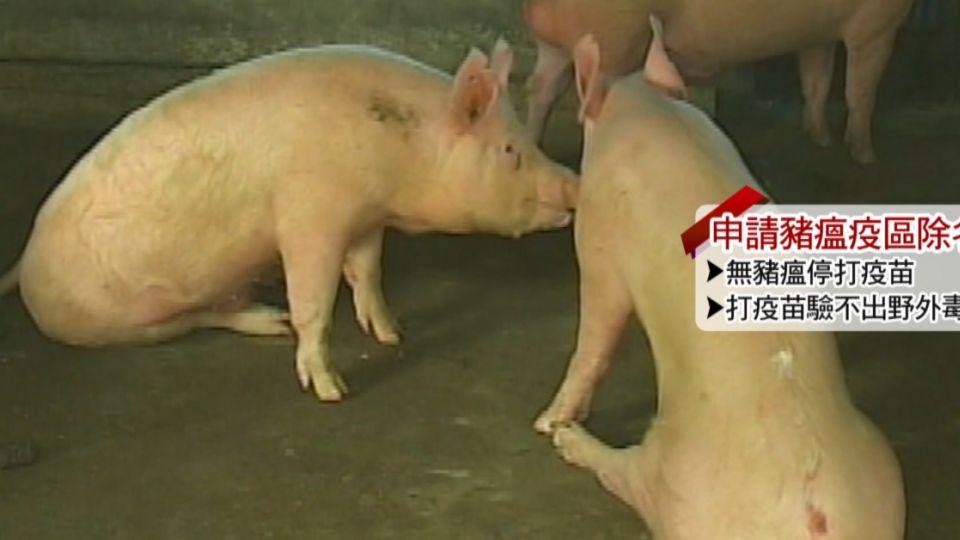 仍用傳統兔化疫苗!十年無豬瘟 台列疫區無除名