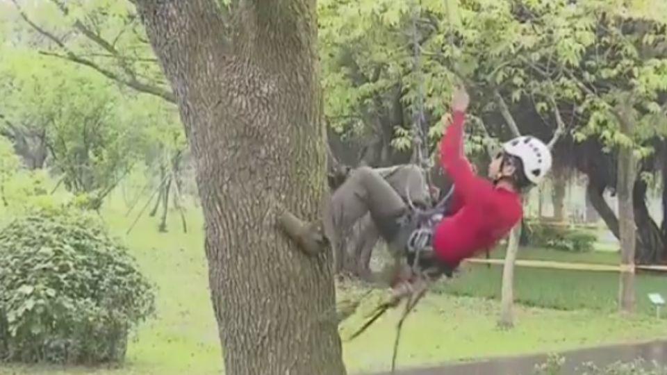 兩分鐘登20米大樹!24歲「攀樹師」月入10萬