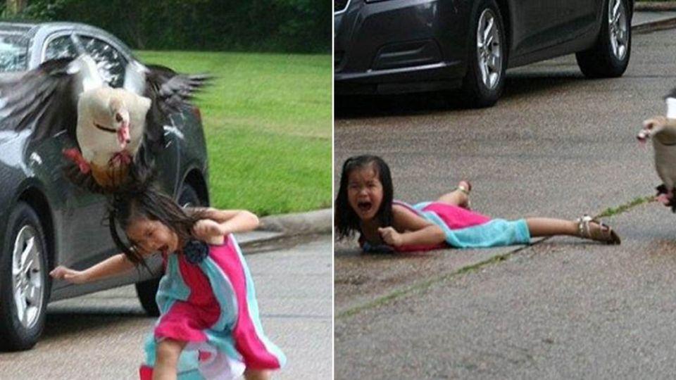 不要嚇「寶寶」!小心雁媽媽會不開心…
