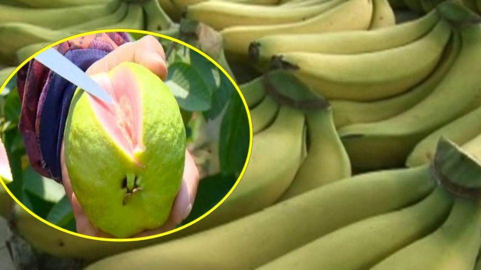 漲驚驚!吃不起 「香蕉芭樂」 每嚐一口心都痛
