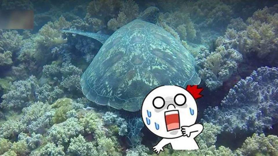 【影片】這一定是「人類」幹的 海龜便便竟拉出…
