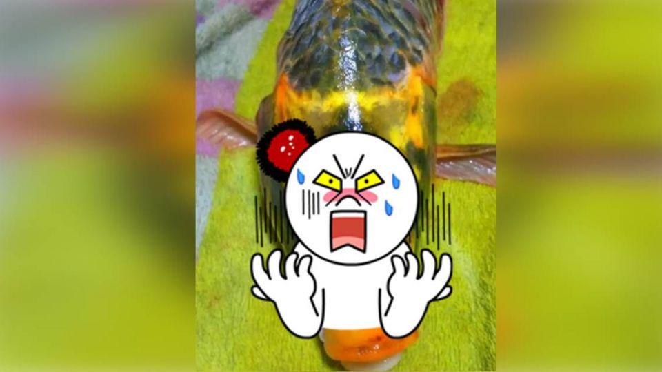 首次發現!「人面鯉魚」現身湖南 捕獲者決定將牠…