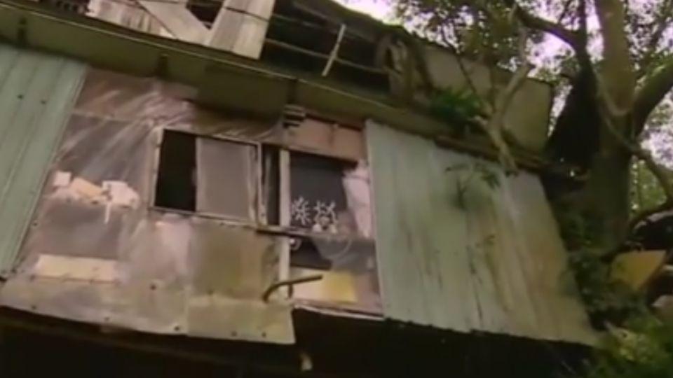 現代山中傳奇 台北68歲翁獨居樹屋30年