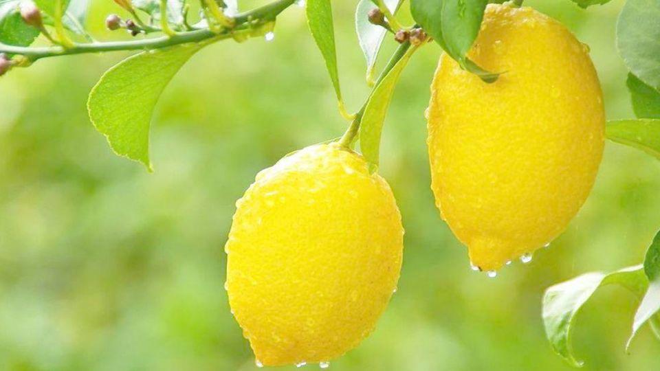 吃「酸」當吃補!日研究:檸檬有益降血壓