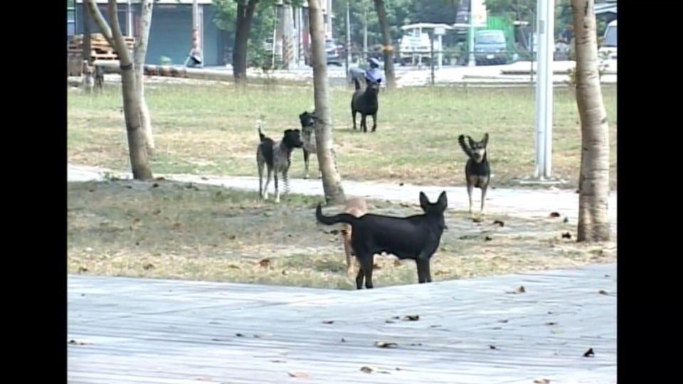 觀光勝地野狗肆虐 女遊客慘遭三野狗夾擊