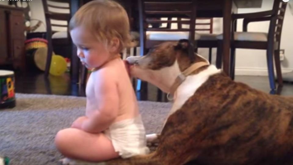 【影片】溫馨!汪星人「濕背秀」讓小寶寶融化了