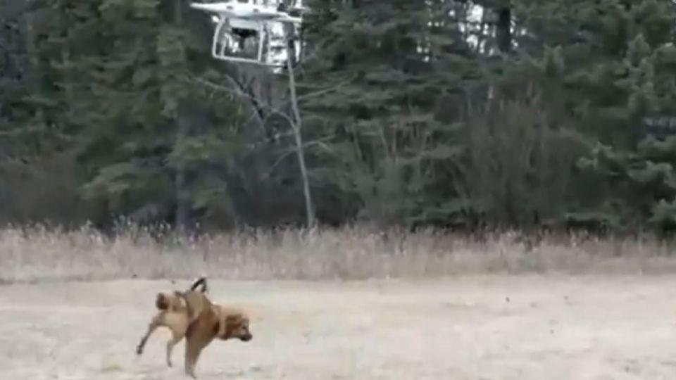男異想天開用無人機溜狗 最後飛上天消失?