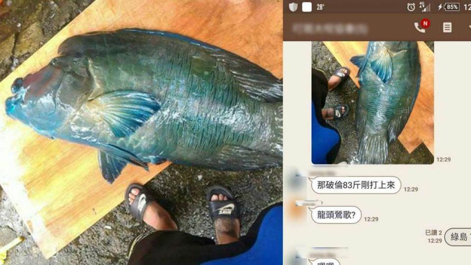 【影片】認了!瞎掰龍王鯛七年前舊照 業者移送台東地檢