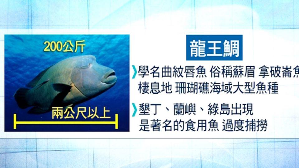 龍王鯛吃毒藻有毒 國外有中毒死亡案例