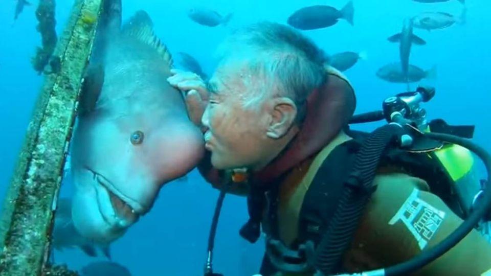 【影片】日爺爺與瘤鯛的「深海之吻」 深厚情感令人動容