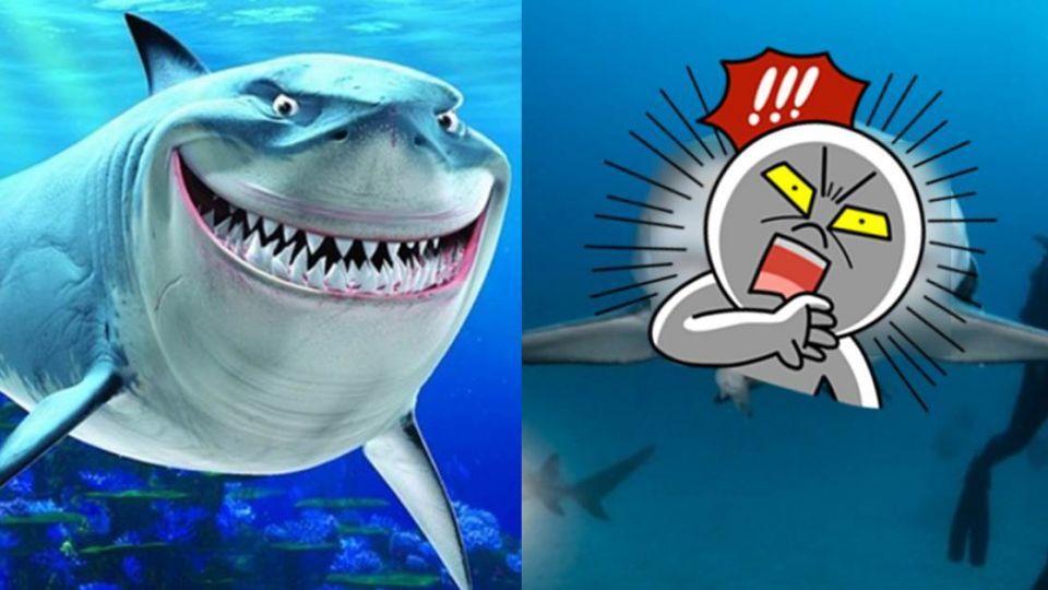 最友善鯊魚?男潛水驚見《海底總動員》布魯斯