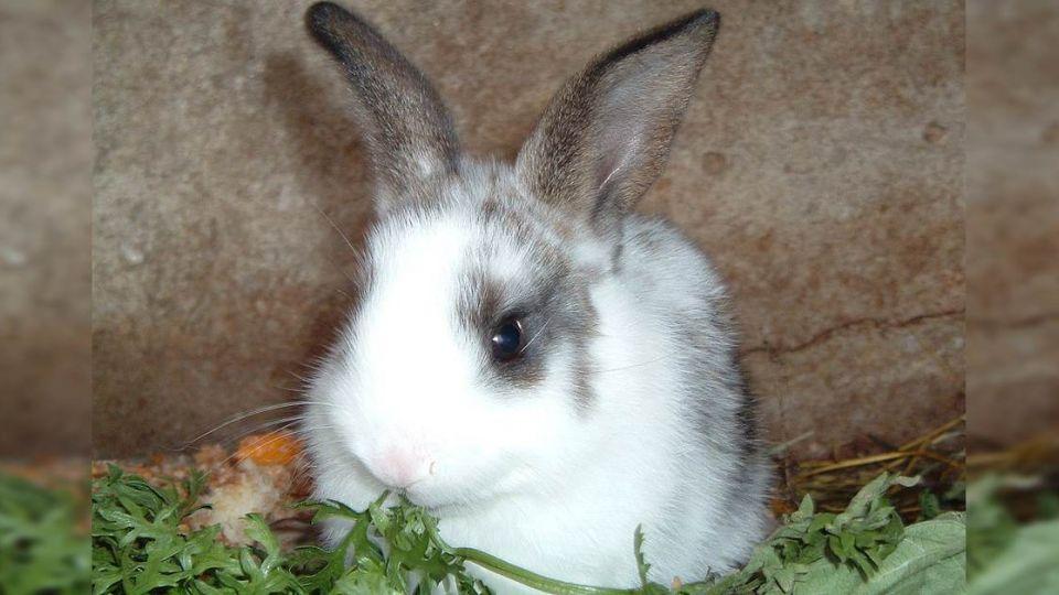 兔子不能「洗香香」?真相竟然是…